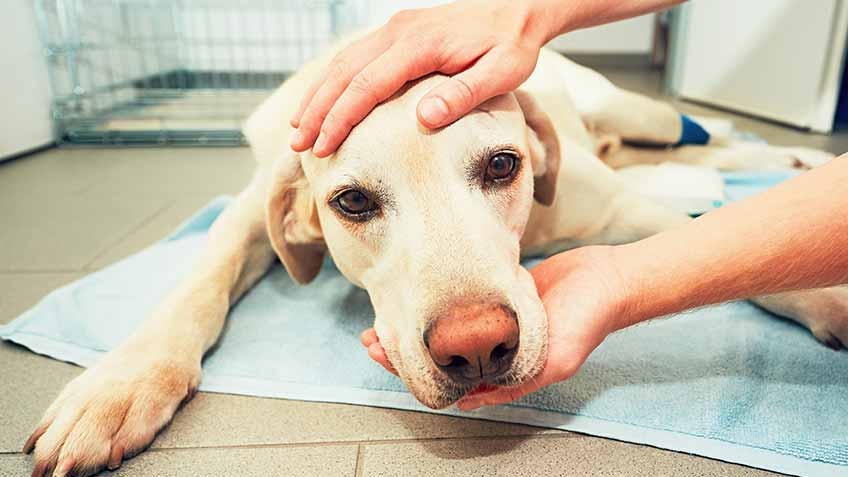 how old is too old to neuter a dog