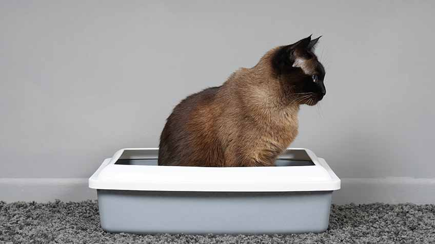 can you flush cat litter down the toilet